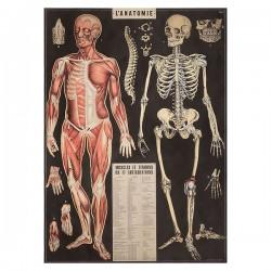 "Poster ""Anatomie"""