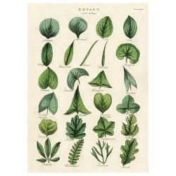 """Poster """"Botany Leaves"""""""