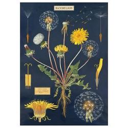 "Poster ""Dandelion"""