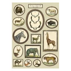 """Poster """"Nostalgische Safari"""""""