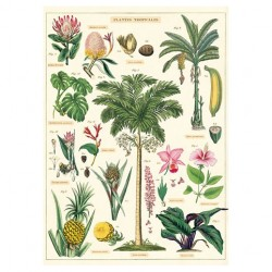 """Poster """"Tropical"""""""