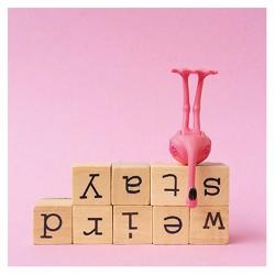 """Flamingo Grußkarte Stay weird"""""""