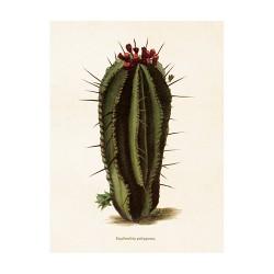 """Vintage Mini Poster """"Kaktus Euphorbia"""""""