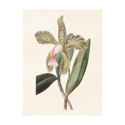 "Vintage Mini Poster ""Orchidee"""