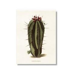 "Vintage Karte ""Kaktus Euphorbia"""