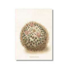 """Vintage Karte """"Kaktus Mammillaria"""""""