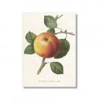 Vintage Karte mit einem Apfel
