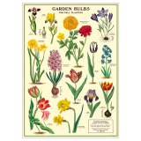 "Poster ""Garden Bulbs"""