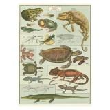 """Poster """"Reptilien und Amphibien"""""""