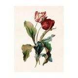 """Vintage Mini Poster """"Tulipa Mix Rot"""""""