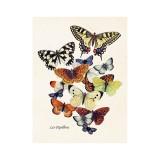 """Vintage Mini Poster """"Les Papillons"""""""