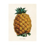 "Vintage Mini Poster ""Ananas"""
