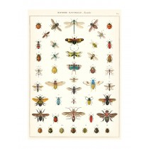 """Poster """"Insects"""""""