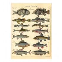 """Poster """"Fische"""""""