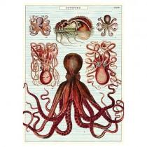 "Poster ""Oktopus"""