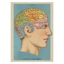 "Poster ""Phrenologie"""
