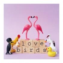 Flamingo Grußkarte LOVE BIRDS