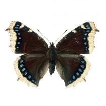 Wand Sticker Schmetterling Schwarz