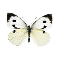 Wand Sticker Schmetterling Weiß