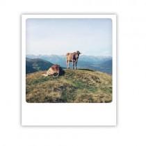 """Pickmotion Karte """"Gipfelchiller"""""""