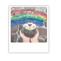 "Pickmotion Karte ""Happy Birthday Hedgehog"""
