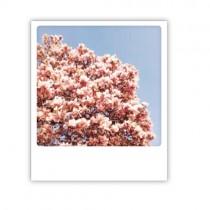 """Pickmotion Karte """"Magnolien"""""""
