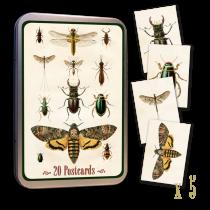 Vintage Karten Set INSEKTEN