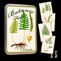 Vintage Karten Set BOTANIK