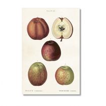 Vintage Karte mit 5 fünf Äpfeln