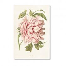 Vintage Karte Pfingstrose Rosa