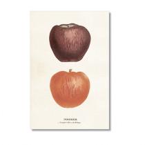 Vintage Karte mit zwei Äpfeln