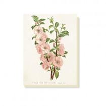 """kleine Vintage Klappkarte """"Kirschblüte"""""""