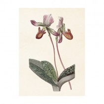 "Vintage Mini Poster ""Orchidee Mauve"""