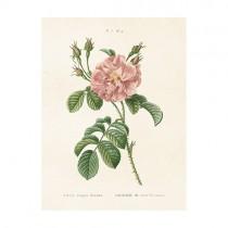 "Vintage Mini Poster ""Rose"""