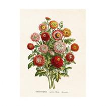"Vintage Mini Poster ""Chrysanthemes"""