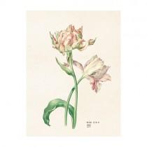 """Vintage Mini Poster """"Tulpen"""""""