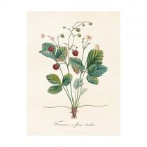 "Vintage Mini Poster ""Erdbeere"""
