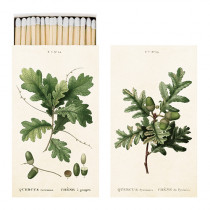 Streichhölzer Quercus