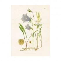 """Vintage Mini Poster """"Glockenblume"""""""