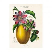 "Vintage Mini Poster ""Barbadine"""