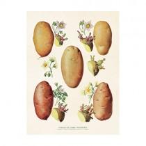 "Vintage Mini Poster ""Kartoffeln"""