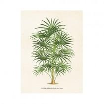"""Vintage Mini Poster """"Palme"""""""