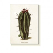 "Vintage Klappkarte ""Kaktus Euphorbia"""
