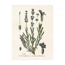 "Vintage Mini Poster ""Lavendel"""