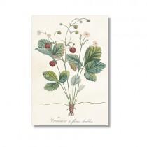 Vintage Karte Erdbeere
