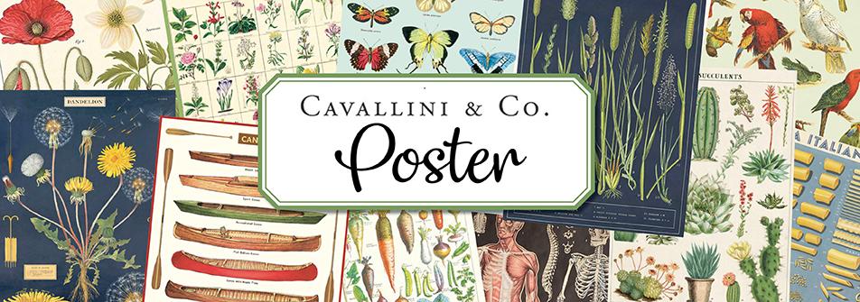 Cavallini Poster